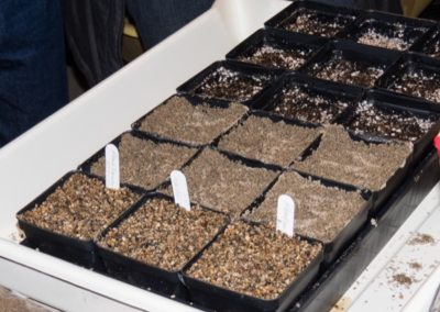 Options in seed starting mix
