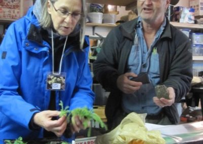 Transplanting, Divisions, Cuttings Workshop