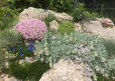 Tufa Plantings