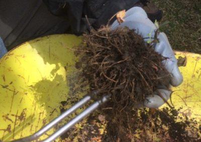 Removing potting soil