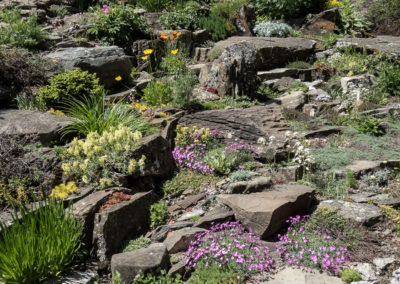 Lichen Covered Sandstone Crevice Garden