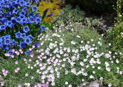 Moss Covered Tufa Plantings