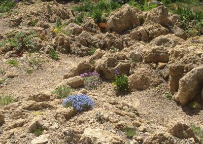 Vertical Tufa Crevice Garden